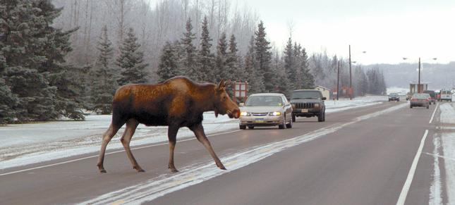 如若每辆车上都有,大自然生命的美会更多一些